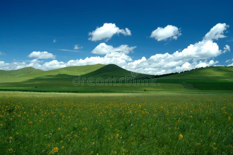 Grassland Summer