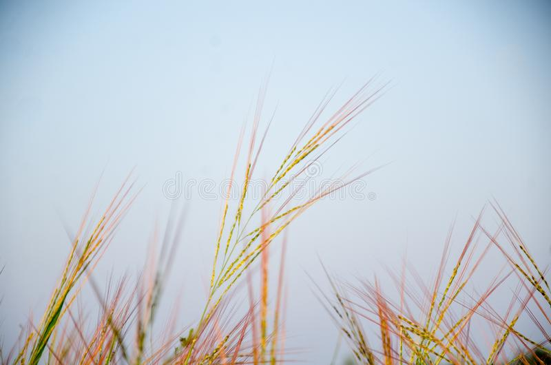 Grassland the first thing of life in Thailand. stock photo