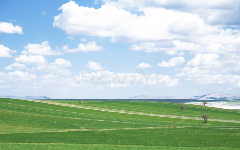 Grassland in Turkey stock images