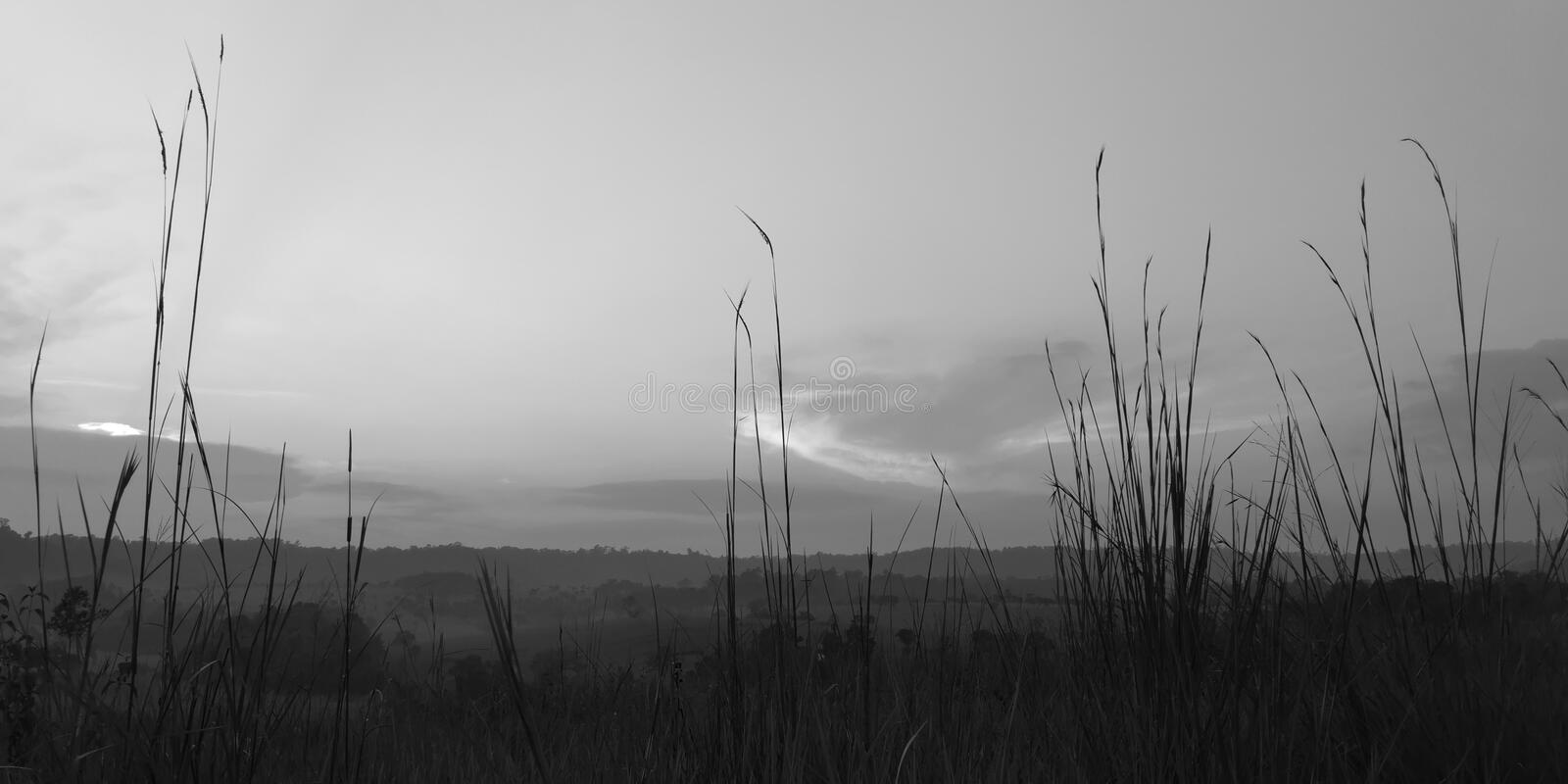 Grassland. Wild grass in the morning sunlight. shallow dept of field. black and white photography stock images