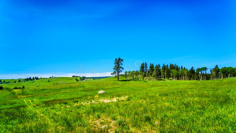 Grasslands alongthe Kamloops Princeton Highway in British Columbia,. Lush Grasslands along Highway 5A, the Kamloops-Princeton Highway, between the towns of royalty free stock photography