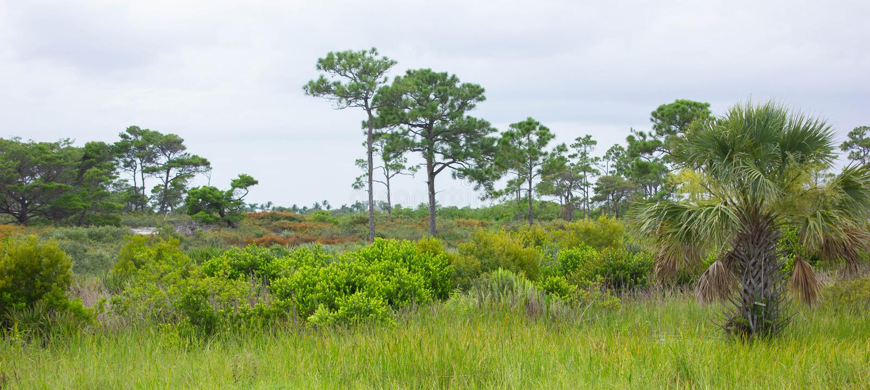 Grasslands of Southern Florida. Panoramic view of grasslands of Southern Florida showing local vegetation including Cocoplum Chrysobalanus icaco, Saw palmetto stock photos