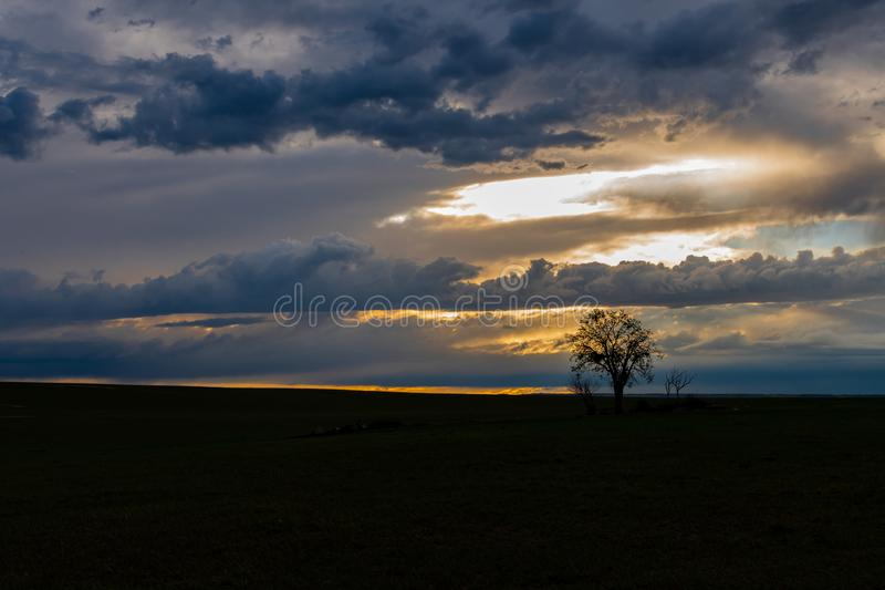 A Lone Tree and Beautiful Sunset on the Plains of Colorado royalty free stock photo
