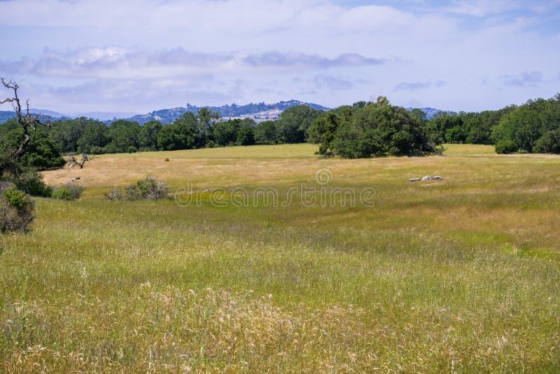 Grasslands view, San Francisco bay area, California royalty free stock photos