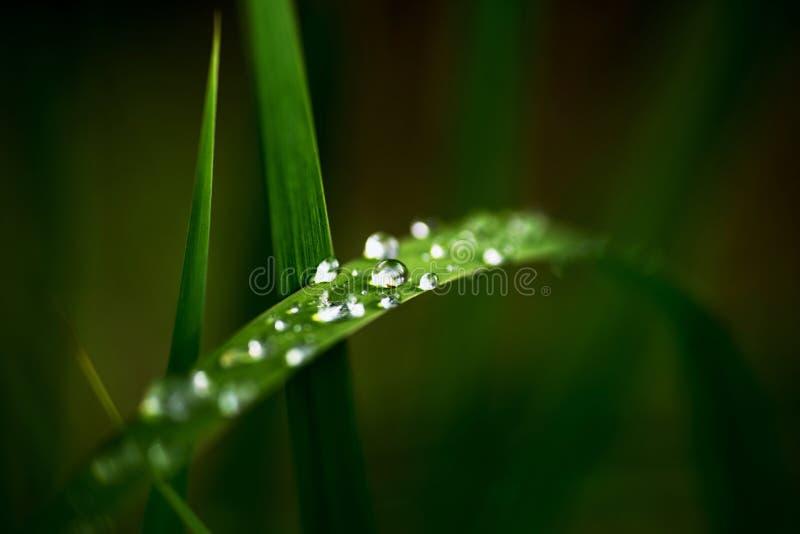 Grassprietje met waterdalingen stock afbeelding