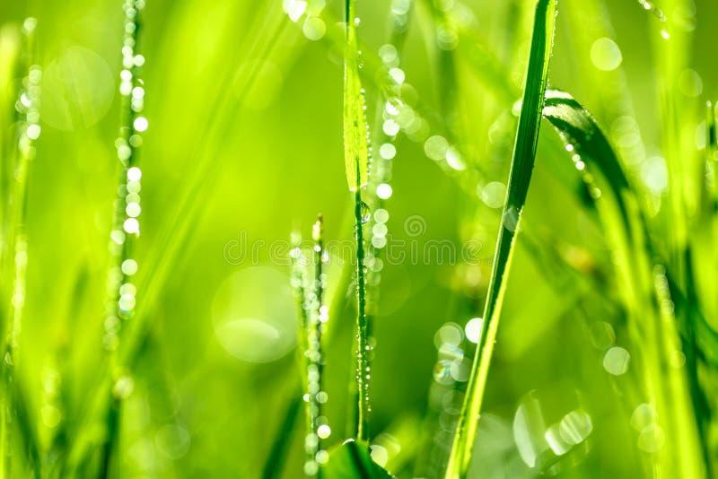 Download Grassprietje In Ochtenddauw Stock Afbeelding - Afbeelding bestaande uit schaduw, abstractie: 54078261