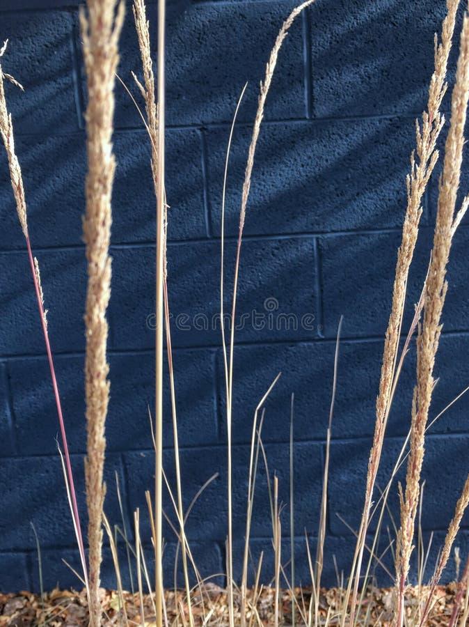 Grassprietjes royalty-vrije stock afbeeldingen
