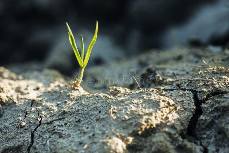 Grasspruit royalty-vrije stock fotografie