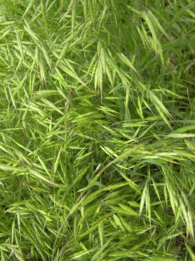 Download GrassTexture001 stock image. Image of fresh, grass, praire - 167389