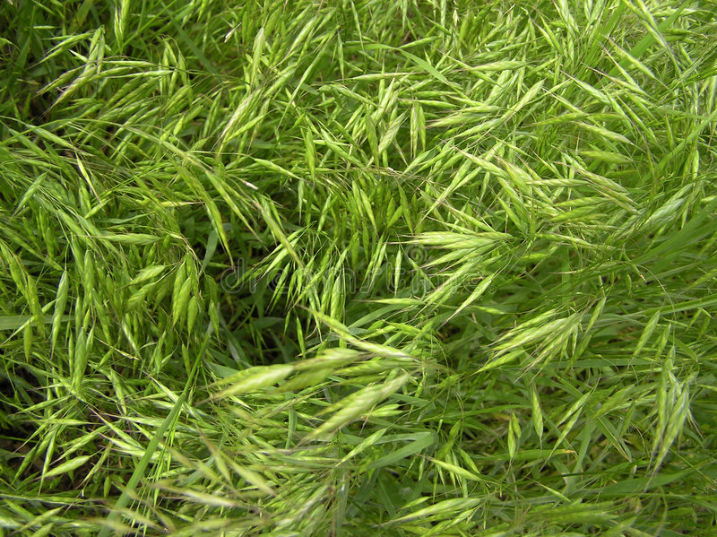 Download GrassTexture002 stock image. Image of fresh, spring, grass - 167385