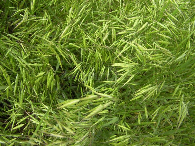 GrassTexture002