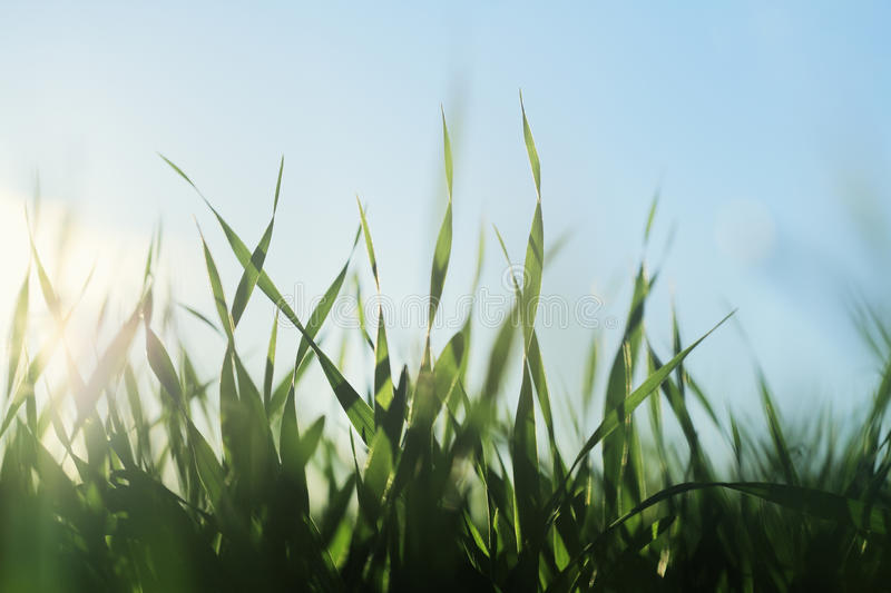 Grassy royalty free stock photos