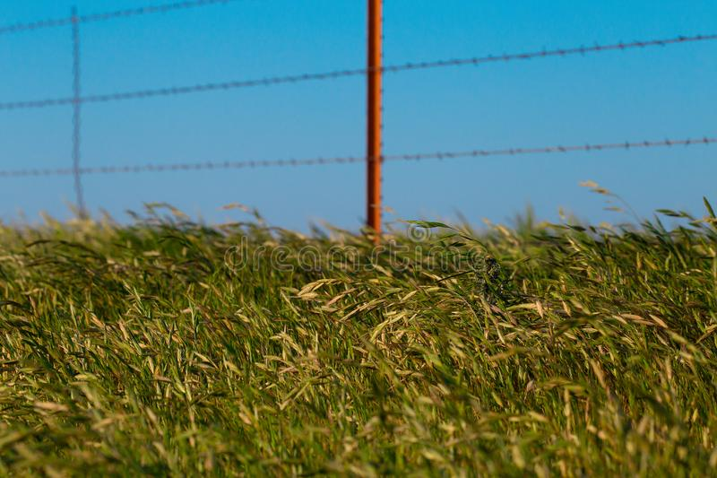 Grassy Ditch In Texas on a Windy Day. An image of a grassy ditch on a windy day with a blurred fence stock photo