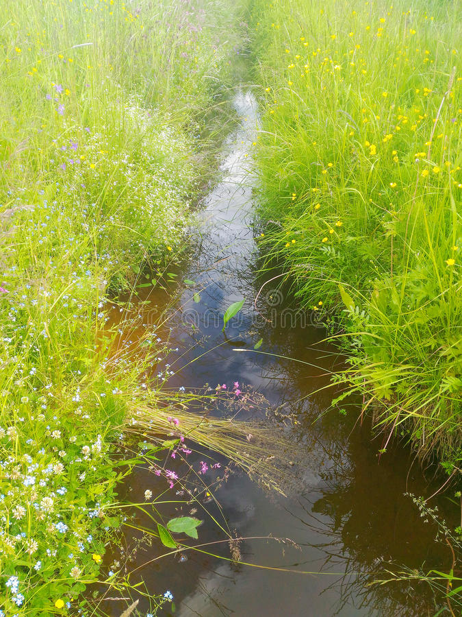 The grassy ditch. Water in the grassy ditch royalty free stock photo