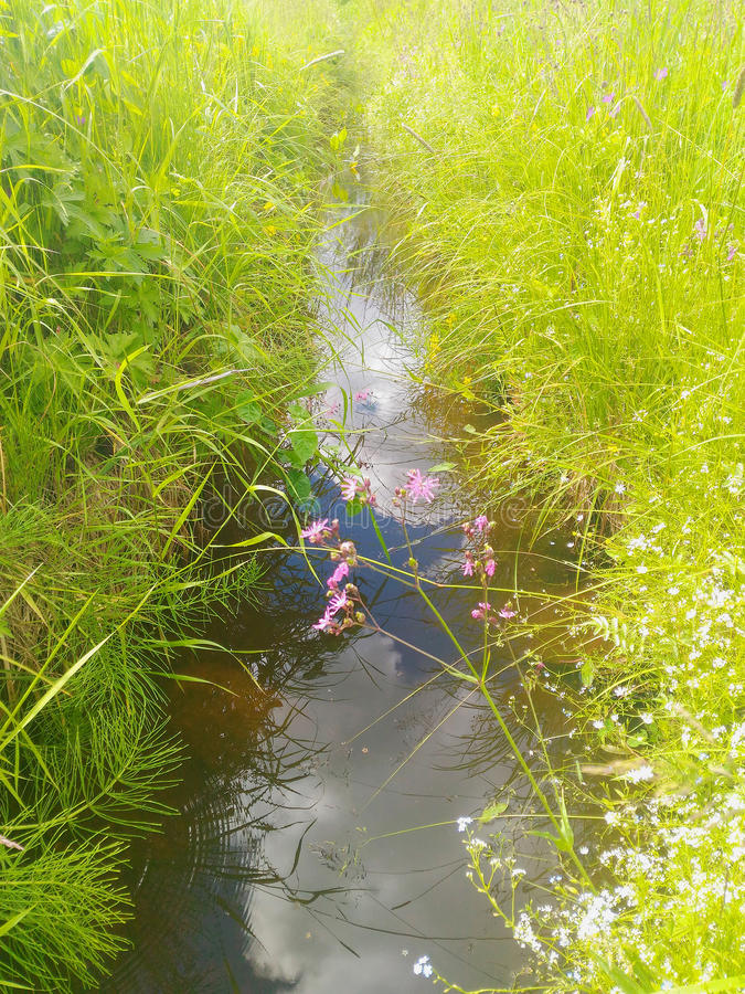 The grassy ditch. Water in the grassy ditch royalty free stock image