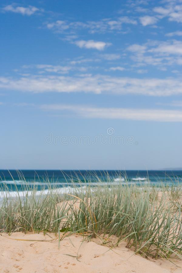 Grassy dune at the beach on a sunny summers day. Grassy dune at the beach on a breezy, sunny summers day royalty free stock photo