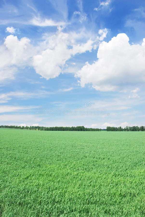 Download Grassy Field Stock Images - Image: 12985864