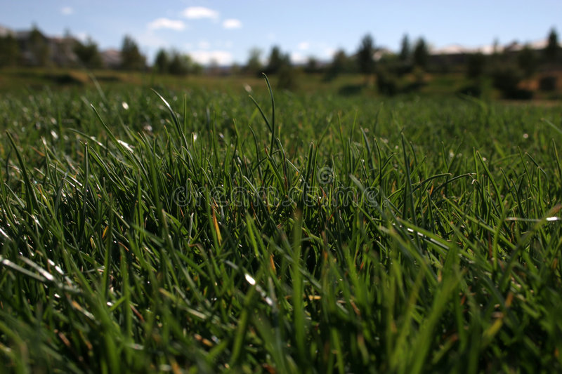 Download Grassy Field Stock Images - Image: 674024