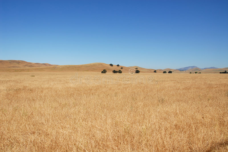 Grassy field stock image image of brown california overgrown 930843 download grassy field stock image image of brown california overgrown 930843 voltagebd Images