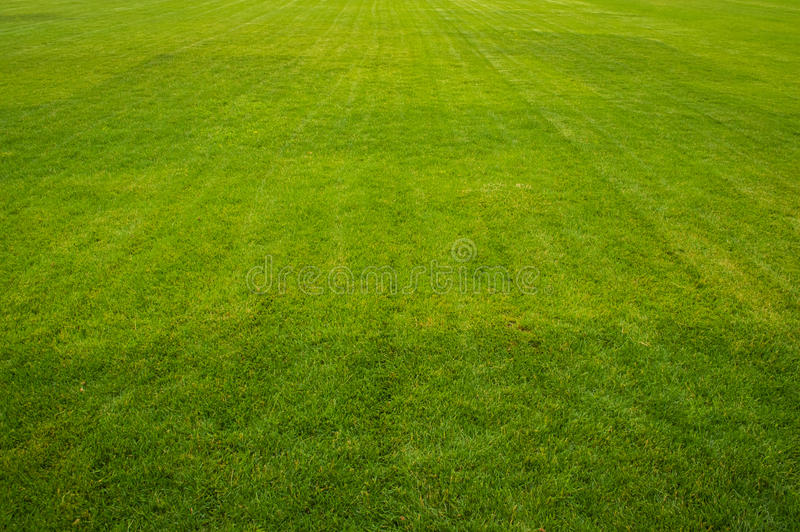 Grassy Field. Background is beautiful stock photography