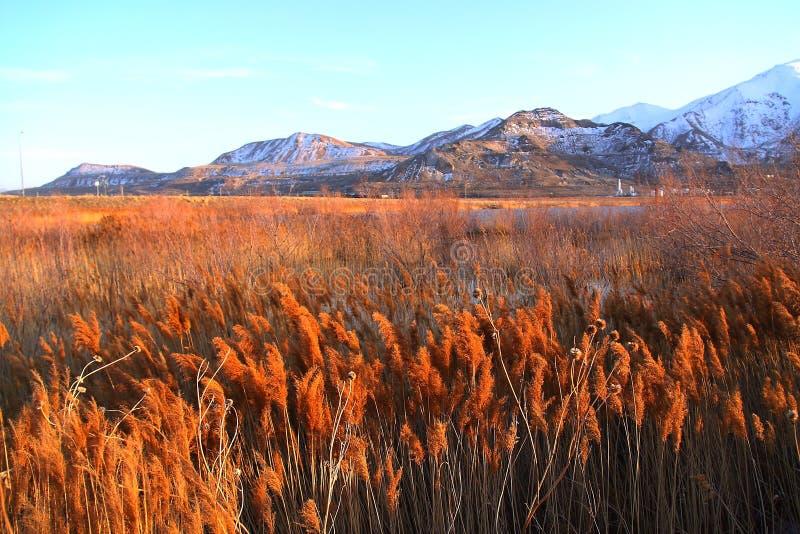 The Grassy Field of Salt Lake City. Utah stock images