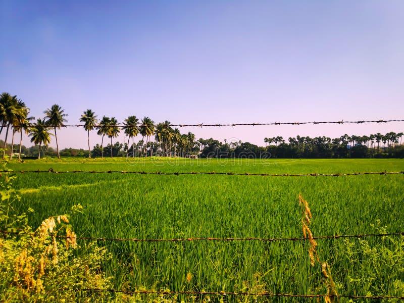 Grassy Fields stock photography