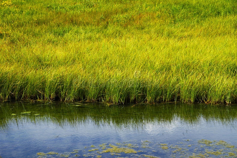 Download Grassy Freshwater Marsh stock image. Image of lush, meadow - 16193145