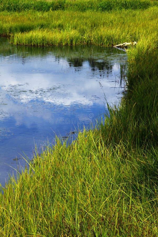 Download Grassy Freshwater Marsh stock image. Image of nature - 16193153