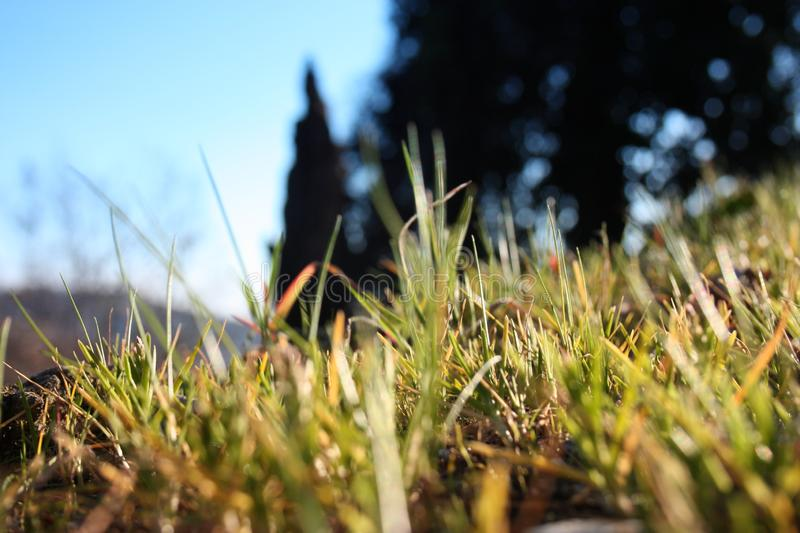 Grassy green lawn focused, main subject. the remaining background and out of focus. generic nature.  royalty free stock image