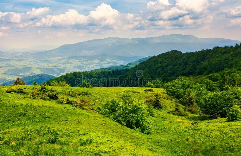Grassy hillside of Carpathian mountains stock photo