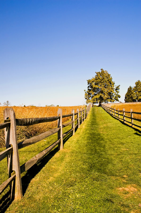 Grassy Lane on a Fall Afternoon royalty free stock photos