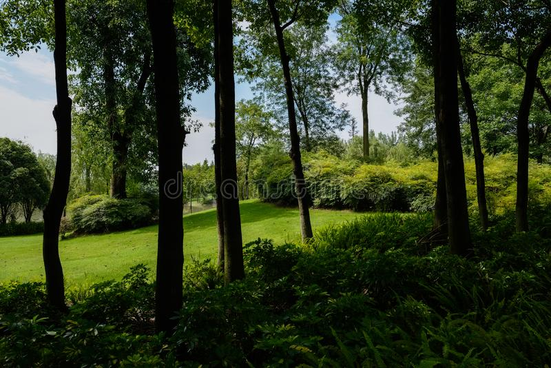 Lawn behind shady plants and trees in sunny summer morning. Grassy lawn behind shaded plants and trees in sunny summer morning royalty free stock photos