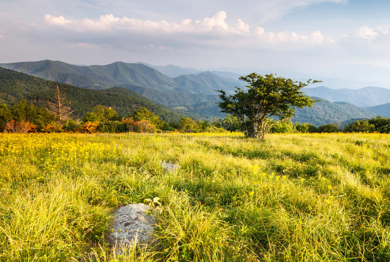 Grassy Meadow on Appalachian Trail North Carolina Tennessee. Landscape of large grassy bald meadow along the Appalachian Trail in the Roan Highland Blue Ridge royalty free stock photo