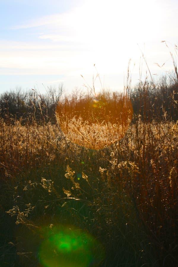 Grassy meadow royalty free stock photo