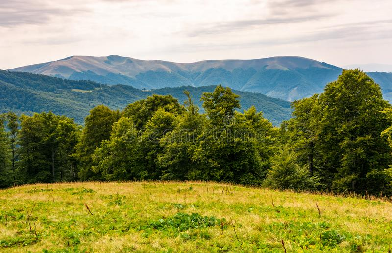 Grassy meadow on forested hillside of Carpathians stock photos
