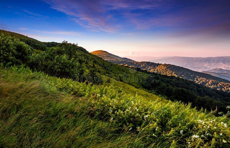 Grassy meadow on a hillside at beautiful reddish sunrise stock photos