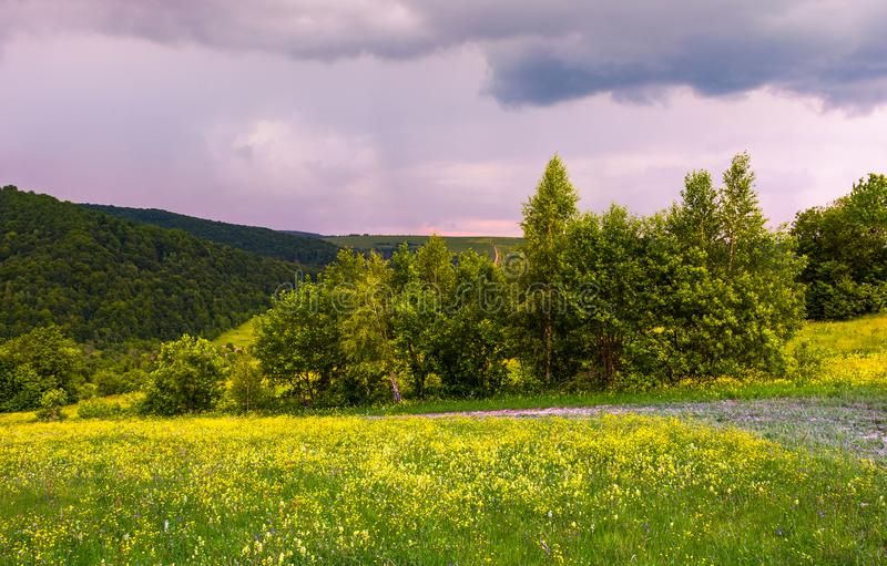 Grassy meadow on the hillside royalty free stock photo