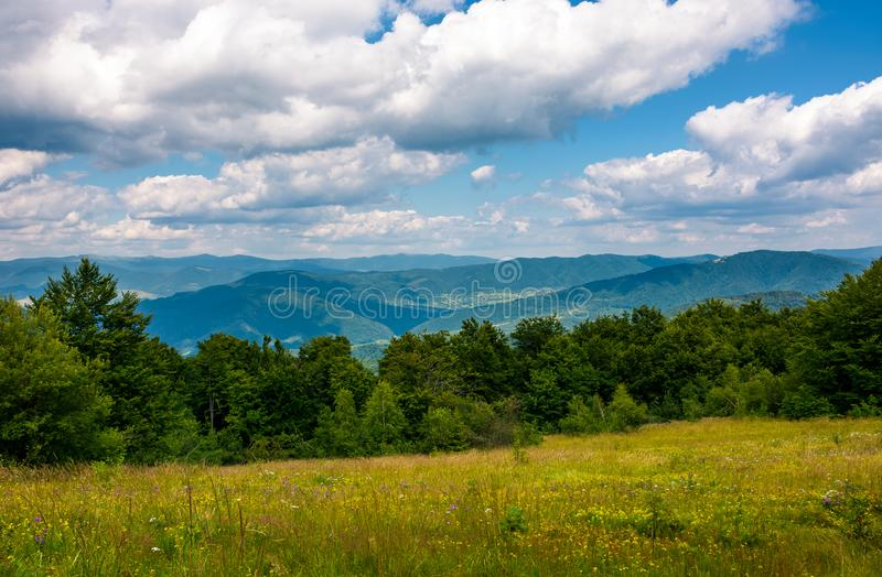 Grassy meadow with wild herbs in mountains royalty free stock photos