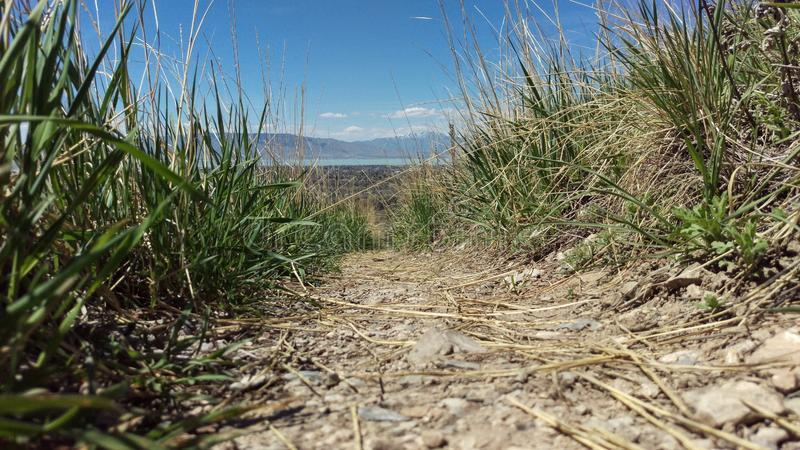 Grassy Mountain Meadow Path royalty free stock photography
