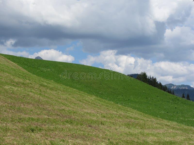 Grassy-veld op de rolheuvel tegen een troebele hemel royalty-vrije stock foto
