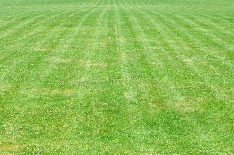 Grassy yard. Empty grassy yard under sunshine royalty free stock image