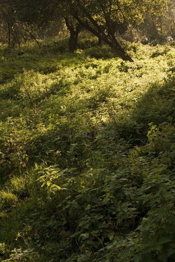 Grasunkrautfeld in der Natur stockfotografie