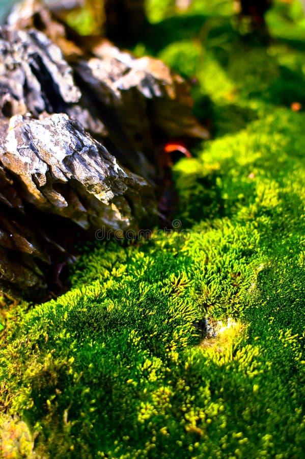 Grasvegetatie op de Boomschors stock afbeelding
