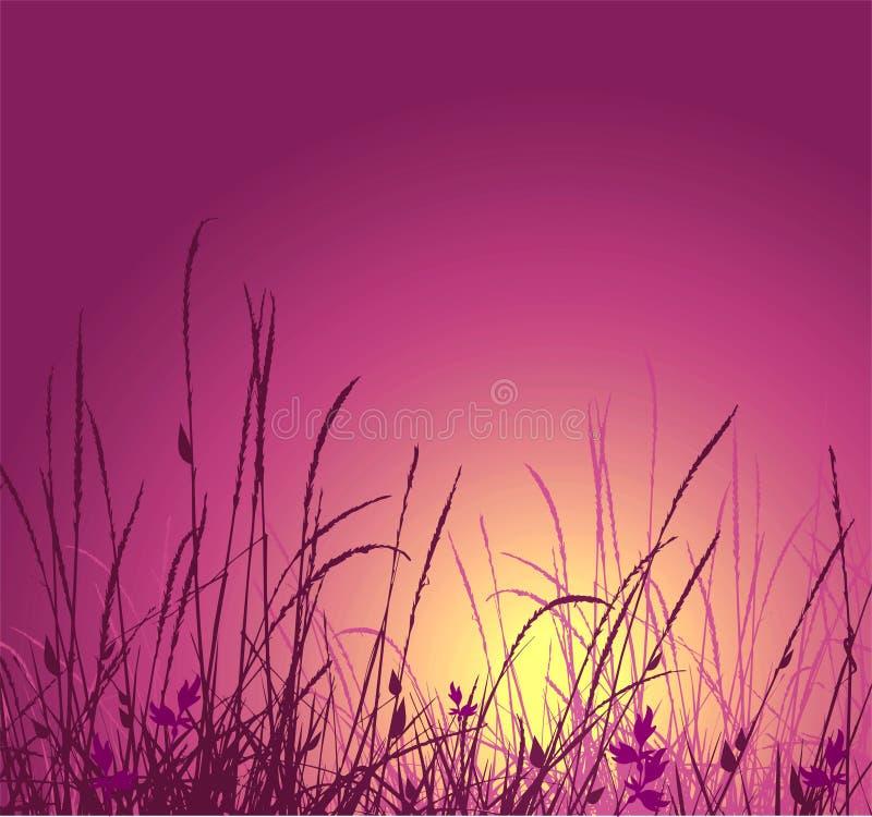 Grasvektorschattenbild und -sonnenuntergang stock abbildung