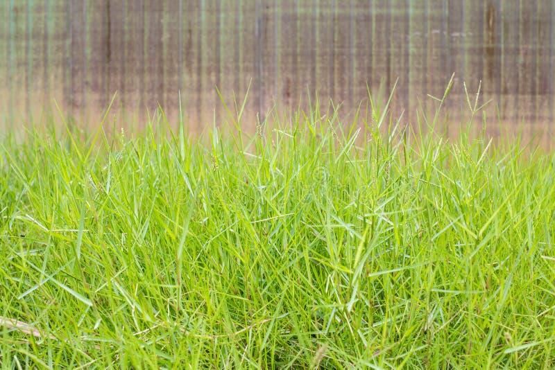 grasveld royalty-vrije stock afbeelding