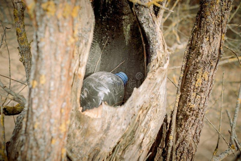 grat w pustym wydr??eniu drzewo natura znika natury ochrony poj?cie, ekologia Klingeryt butelki w lesie zdjęcia stock