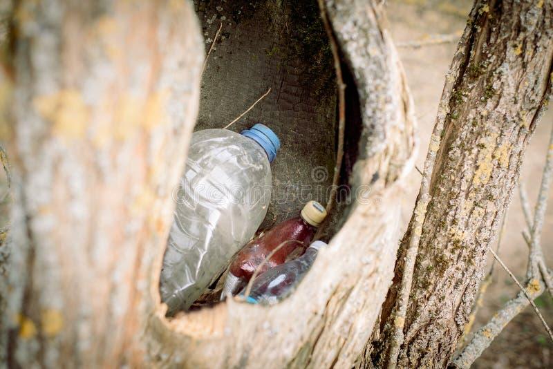 grat w pustym wydr??eniu drzewo natura znika natury ochrony poj?cie, ekologia Klingeryt butelki w lesie obrazy stock