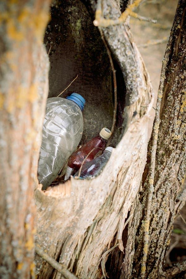 grat w pustym wydr??eniu drzewo natura znika natury ochrony poj?cie, ekologia Klingeryt butelki w lesie zdjęcie stock