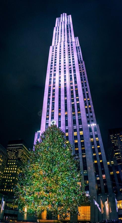 Gratte-ciel et arbre photo libre de droits
