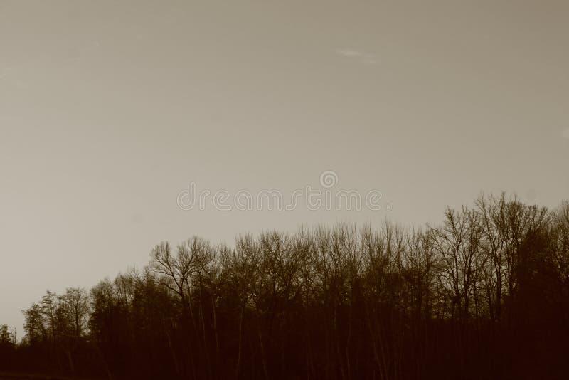 Gratte-ciel foncé et dense de forêt photo stock